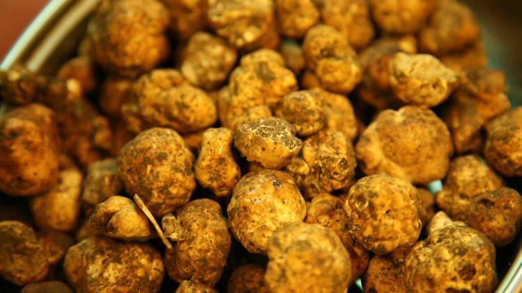 Istrian truffles, food and drink, restaurants, istria, croatia