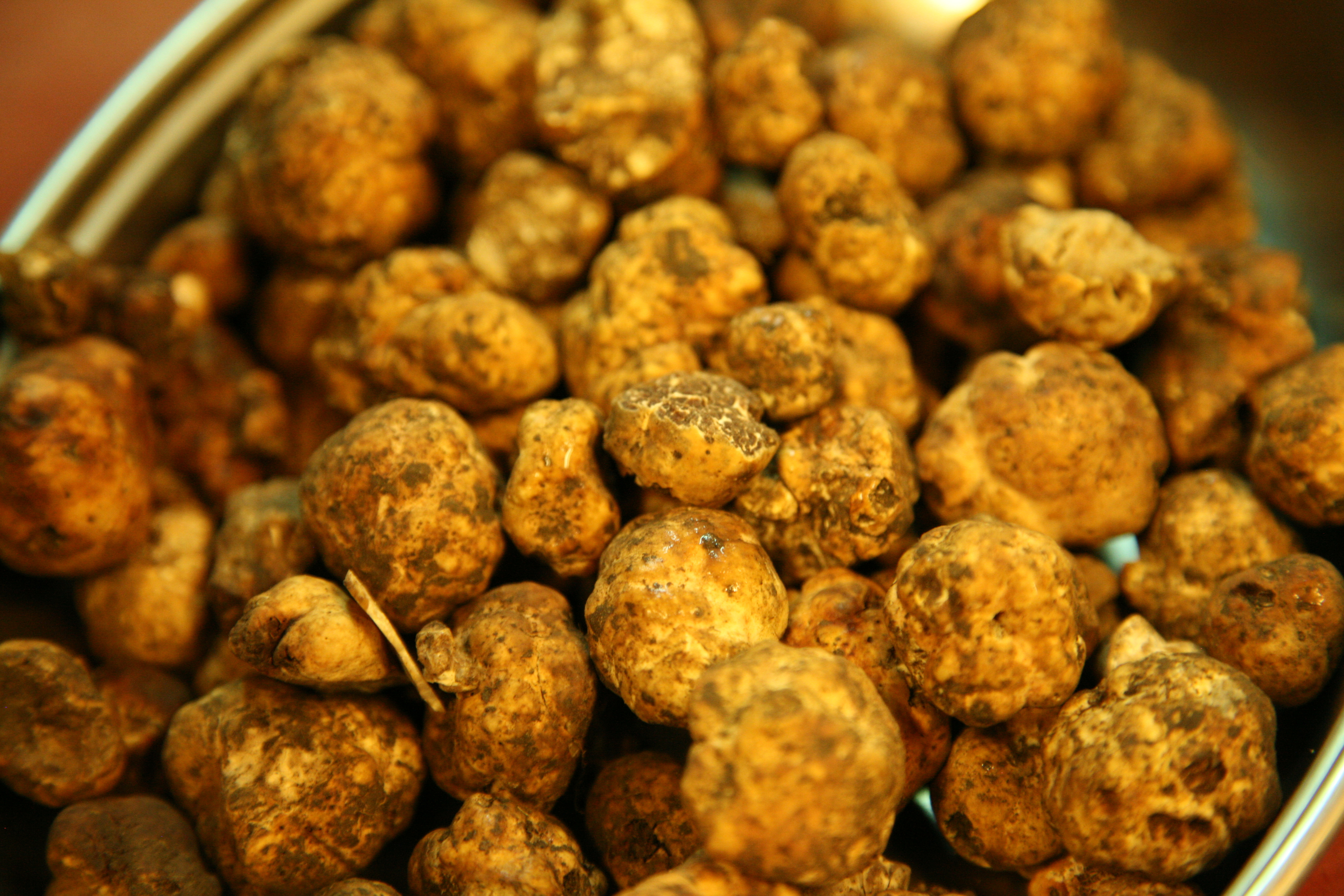 Istrian truffles, food and drink, restaurants, istria, croatia