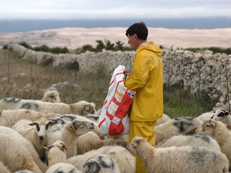 Devour succulent lamb