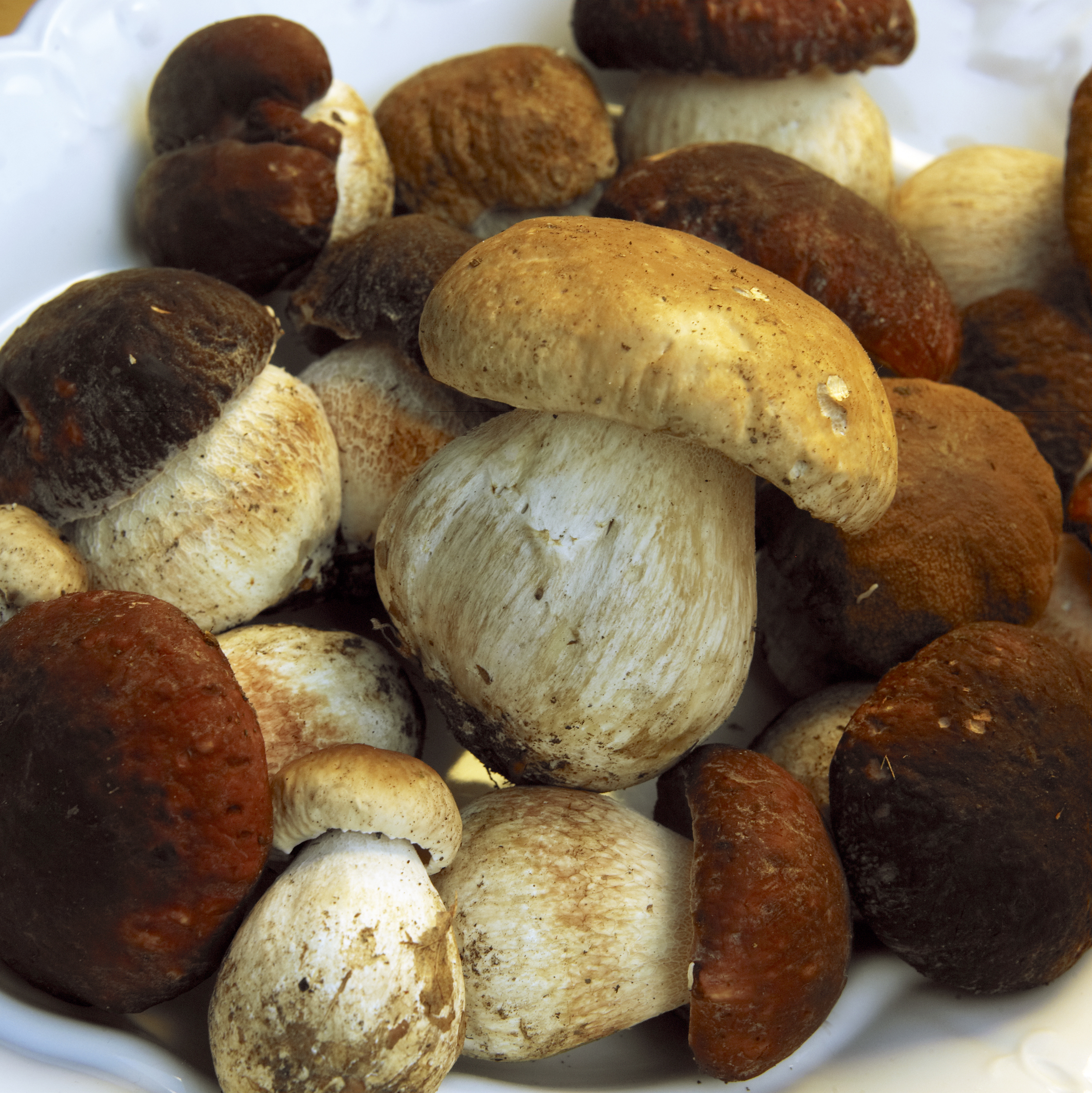 Mushrooms, wild, food and drink, croatia