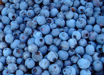 berriesss.jpg