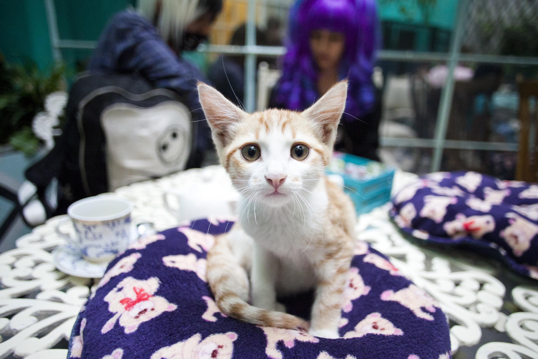 gatito del catcafe tienda de los gatos