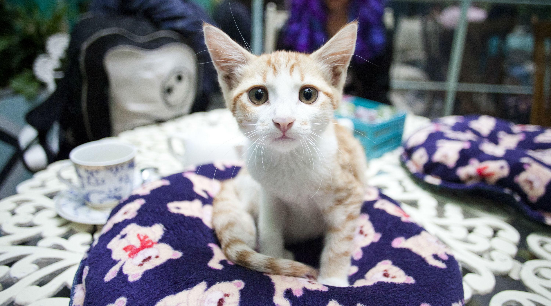 gato en el catfecito de la tienda de los gatos