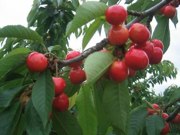 Terhune Orchards