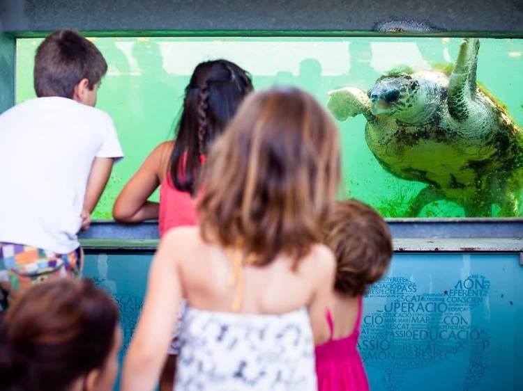 Centre de Recuperació d'Animals Marins