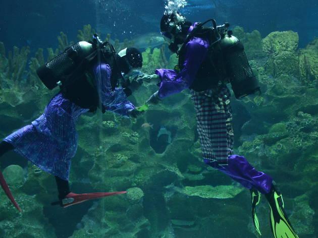 Aquaria KLCC Raya