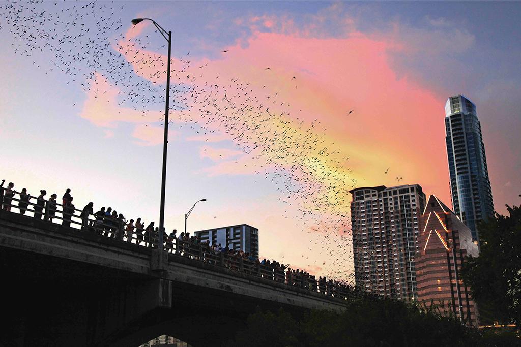 Go to bat on Lady Bird Lake