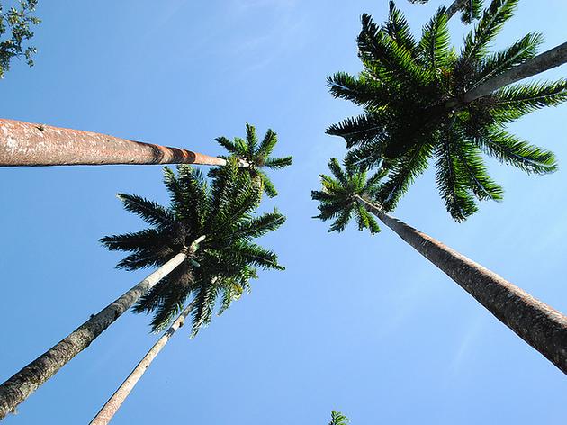 jardim botanico airbnb