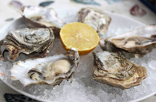 oysters, seafood