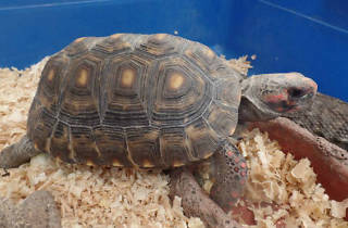 Curso de verano con tortugas