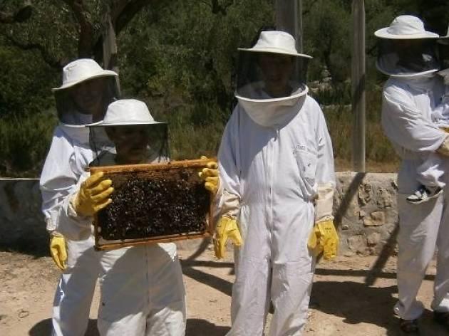 Activitat amb mel