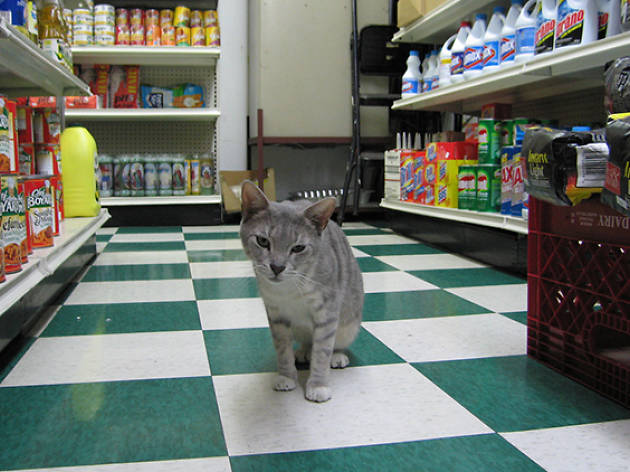 Check out these photos of New York's cutest bodega cats