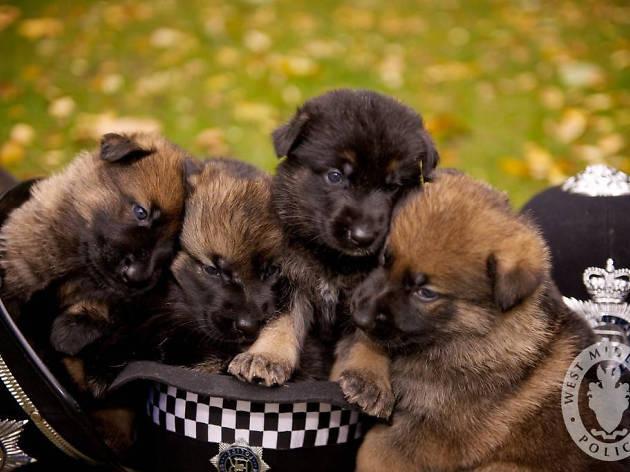 West Midlands Police wants you to play with their puppies
