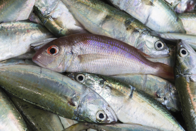 Little Fish Market