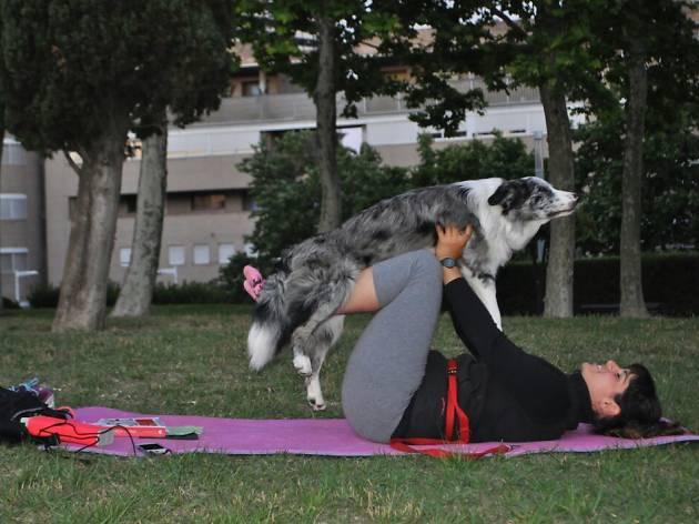 ioga amb gossos