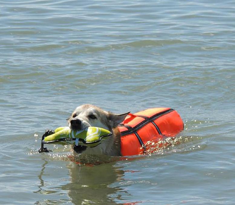 Natación en el mar