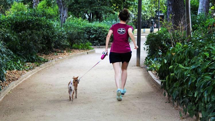 Esport amb gossos