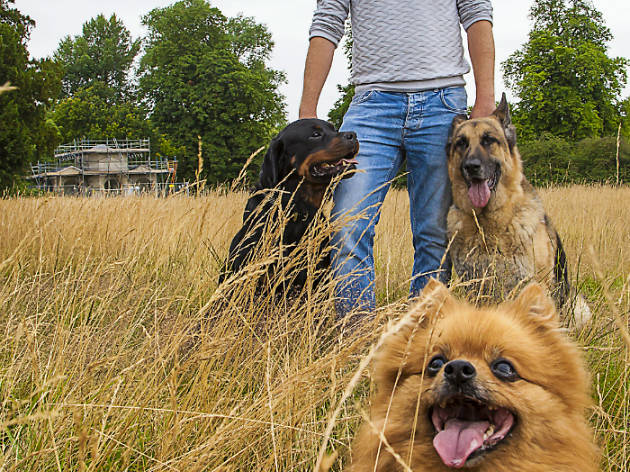 quit your job become a dog walker