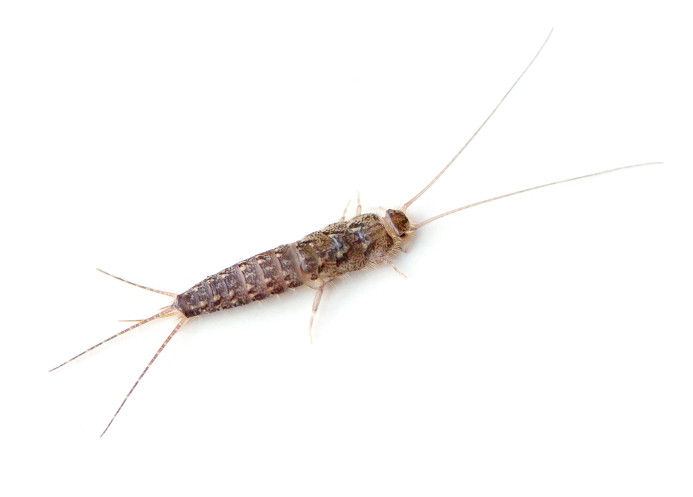 Every Time I See One Of These Cuties In My Bathroom Practically Hang Myself With Shower Curtain Fear House Centipedes Have Like 15 Pairs Legs