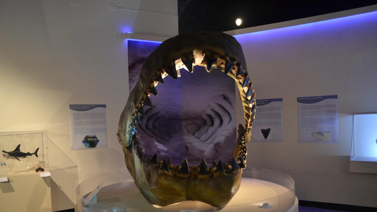 Exposición Tiburones, mantas y rayas. Centinelas del océano