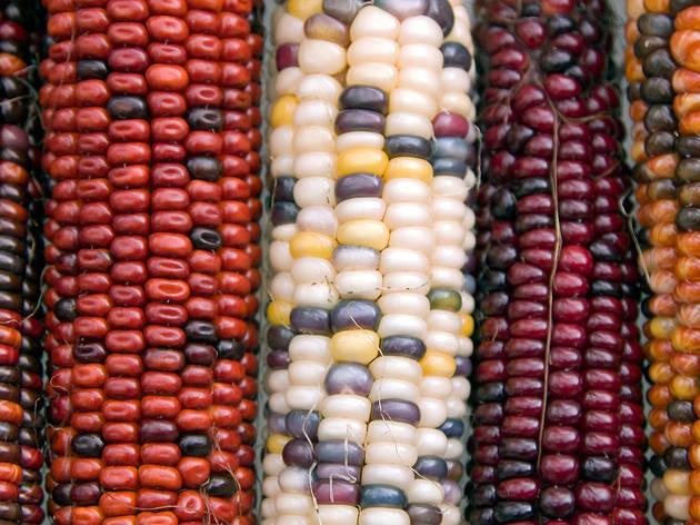 Más maíz para el país