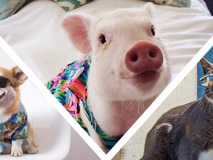 The 10 cutest L.A. pet Instagram accounts