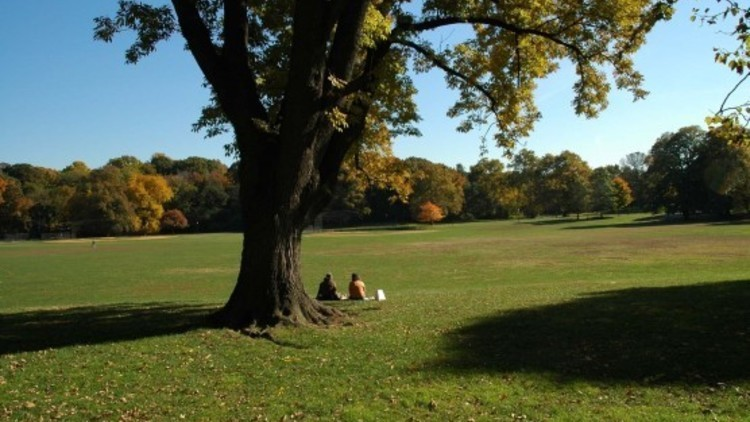 Have a picnic in Prospect Park