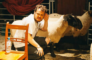 King Lear with Sheep