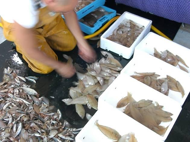 Pesca a Cambrils