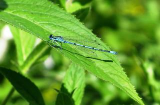 Dragonflies: Open Day in the Wildlife Area