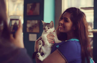 OMG: New York is getting a second cat café next month