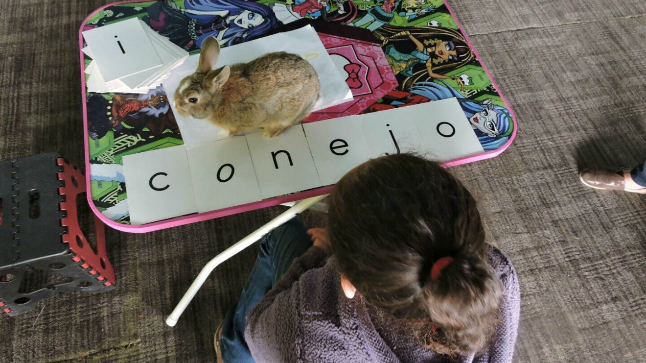 Bocalán. Conejos