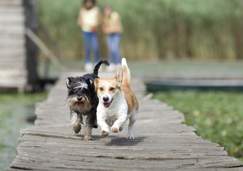 MatchDog, la aplicación que conecta a perritos
