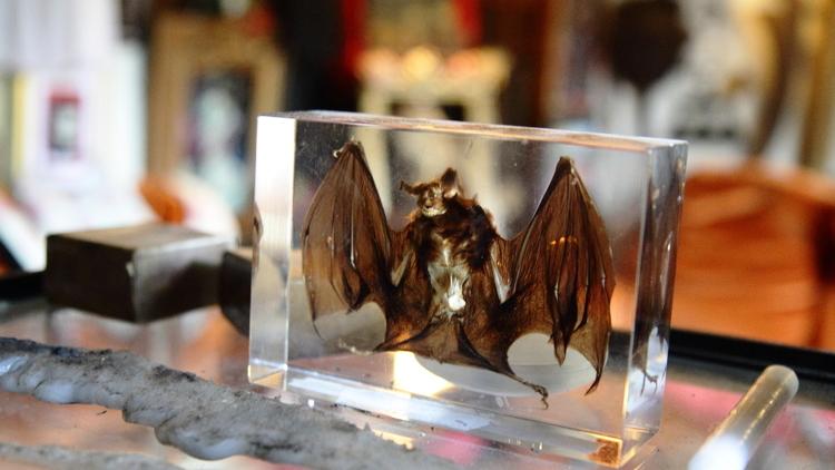 Le Musée des vampires