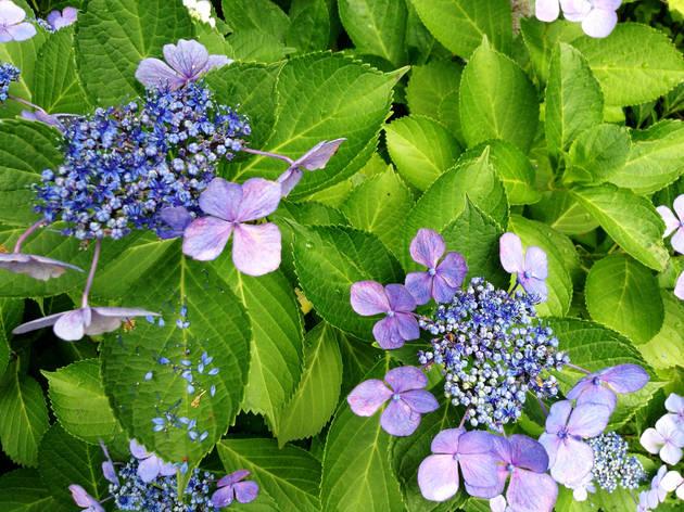 Flowers at Mukojima Hyakkaen | Time Out Tokyo