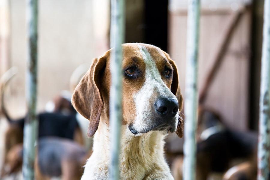 Centre d'Acollida d'Animals de Companyia de Barcelona (CAACB)