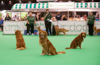 (© Kennel Club)
