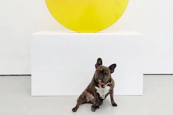 Canine connoisseur does not sniff at contemporary art