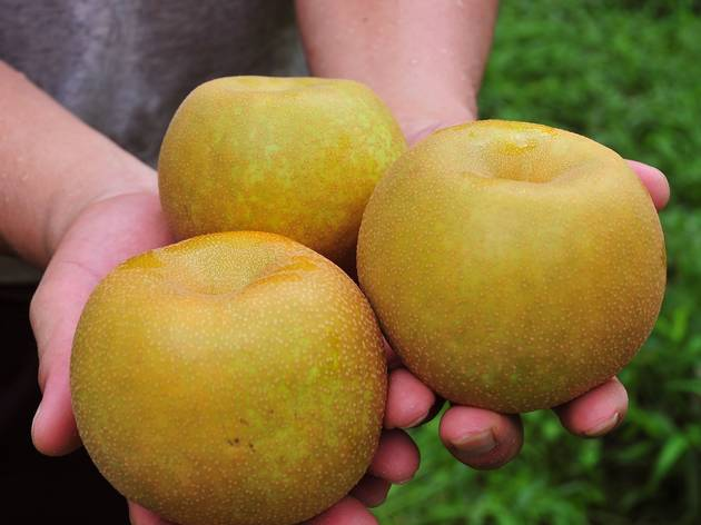 Pluck ripe pears straight from the tree