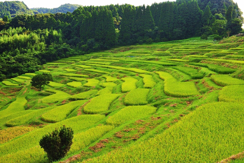 Oyama Senmaida rice paddies | Time Out Tokyo