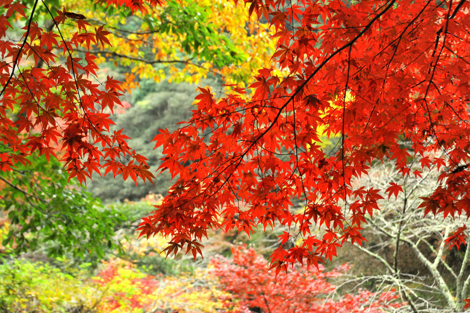 Marvel at the seasons' colours at Hondoji Temple
