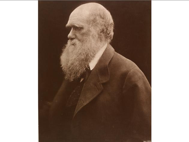 (Julia Margaret Cameron: 'Charles Darwin', 1868. © Victoria and Albert Museum, London)