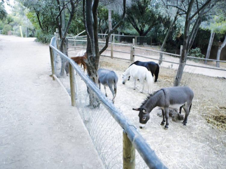 En poni pel parc de l'Oreneta