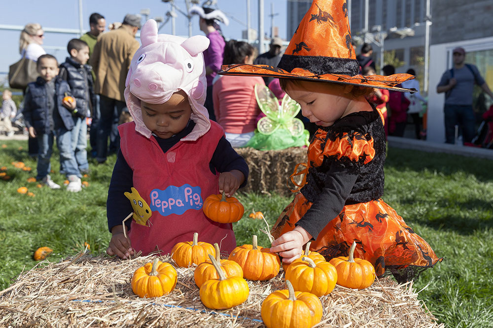 The best harvest festival events for families in NYC
