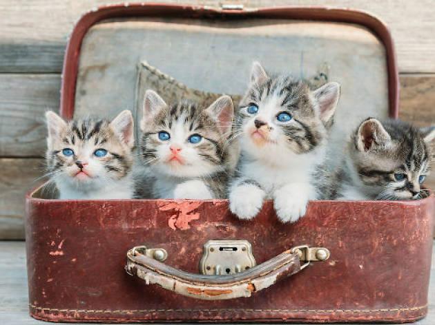 31 gatitos