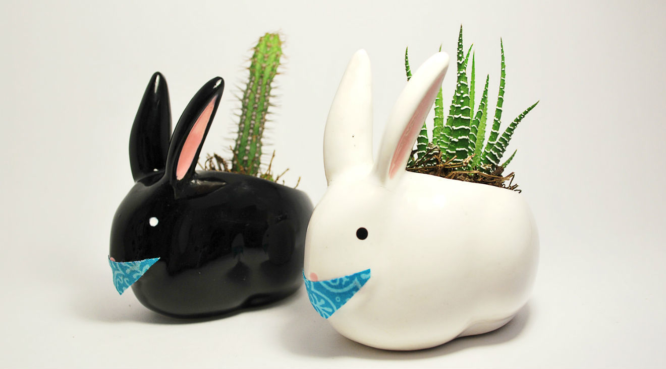 Macetas de cooperativa de conejos.