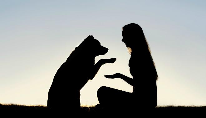 Guía rápida para rescatar perros o gatos de la calle