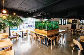 시클리드 아쿠아리움 카페