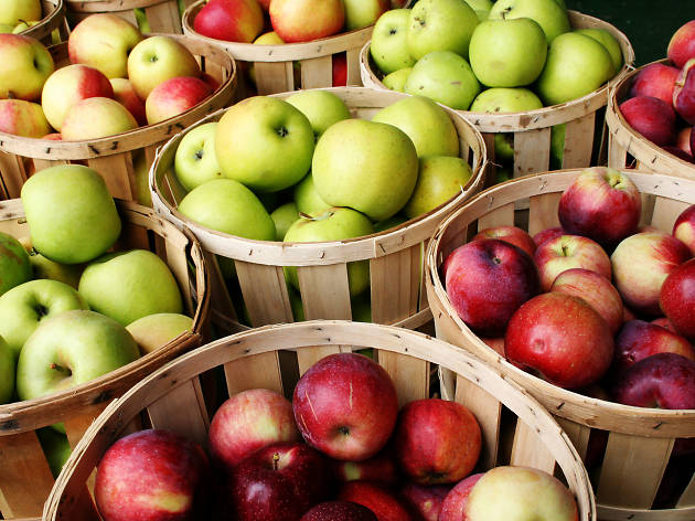 Where to go apple picking near Chicago