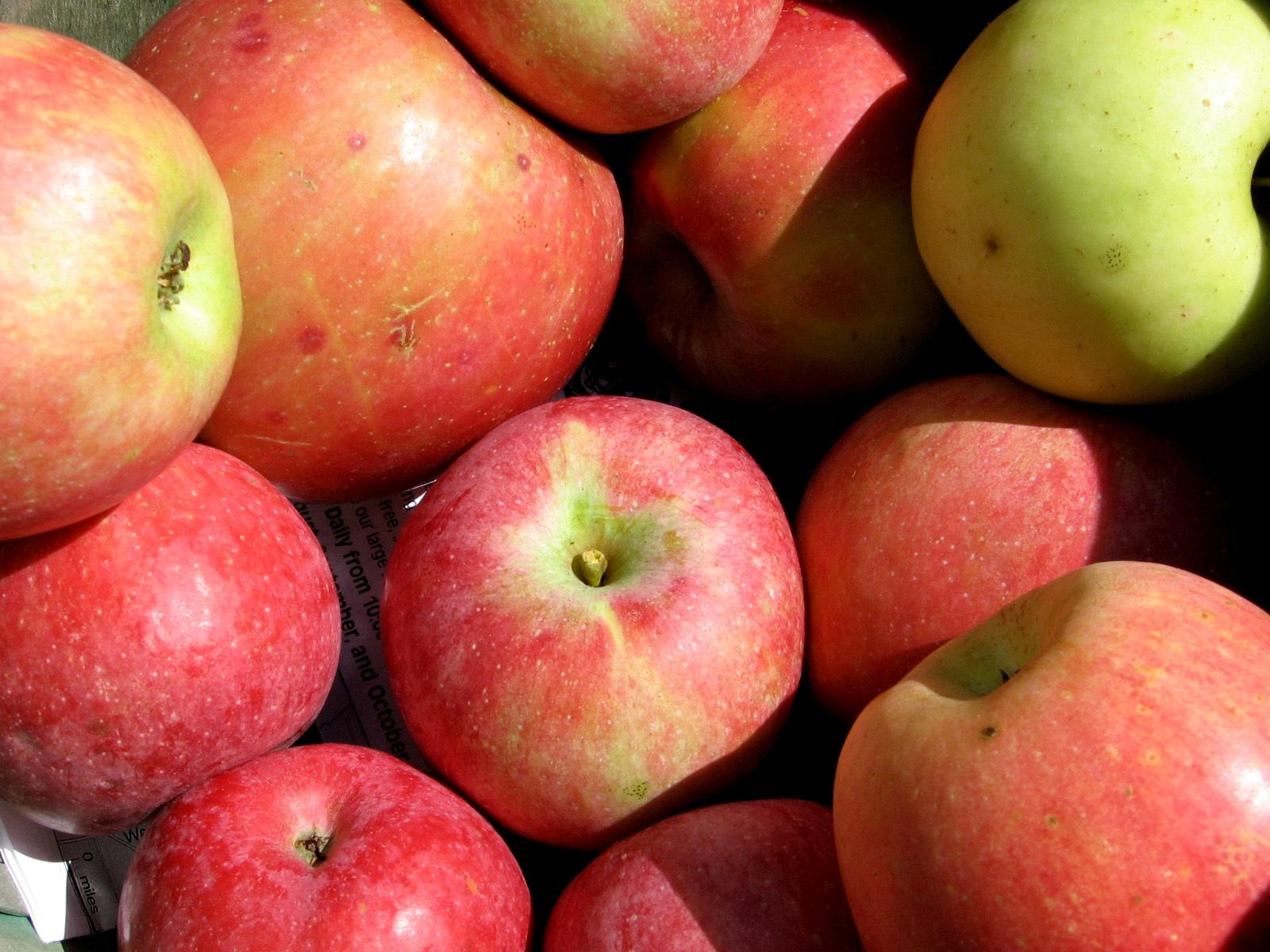 Ziegler's Orchard